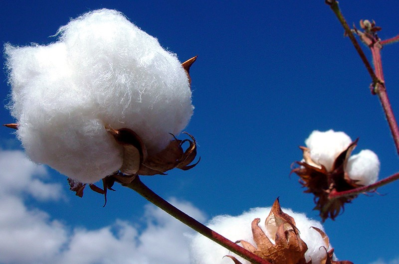 Choosing Organic Cotton Goes a Long Way