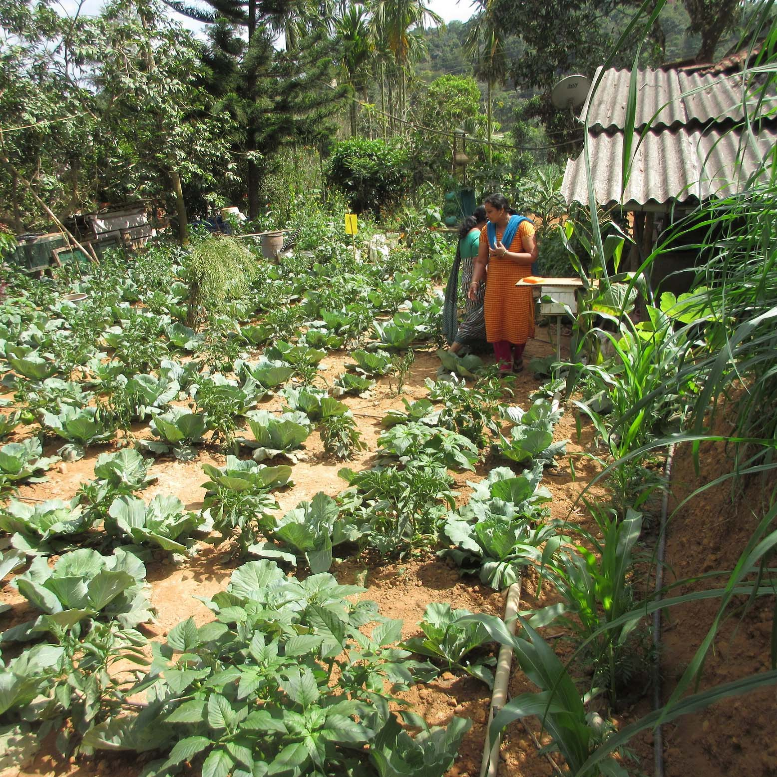 Functional Farming: Integrated Agricultural Systems